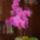 Hegedűsné Ancika orchideái