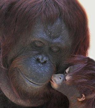 """""""állati"""" csók 3"""