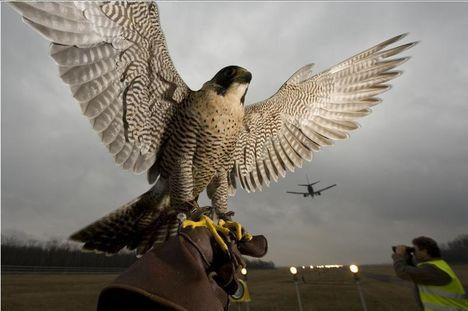 Urbán állatok06 - Sajtófotó 2009 - Kategóriagyőztesek