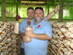 Vezetőink a ganoderma gombával
