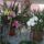 Papp Ildikó orchideái