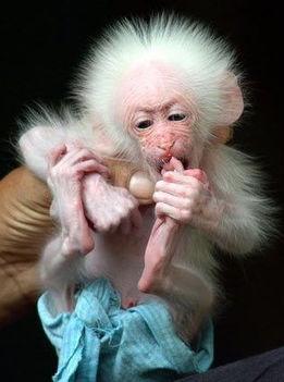 baby majom3