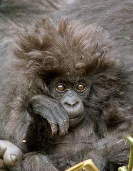 baby majom 2