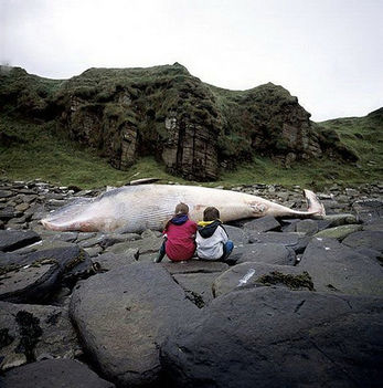 bálna  parton 2