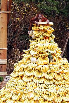 banan es a majom