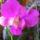 Orchideák Erzsikétől, Ilcsikétől