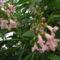 Trombitafa virága közelről