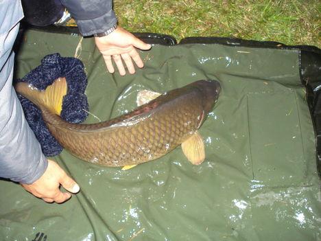 VIP tó   Kemecse, hihetetlenül erős halak laknak a tóban. A fárasztások  igazi élményt nyújtanak.