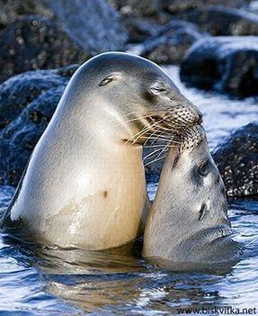 Állati csókok 35