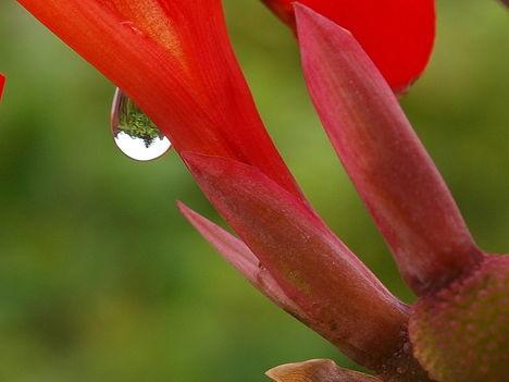 Esőcsepp2