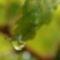 Esőcsepp