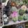 Kaktuszok-Kiállitáson-készűlt-képek