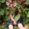 kislány a virágok, közt nagyon aranyos