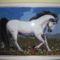 Szamosközi: Fehér ló