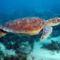 11.teknos_turtle12