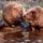 Folyóinkba betelepült hódok