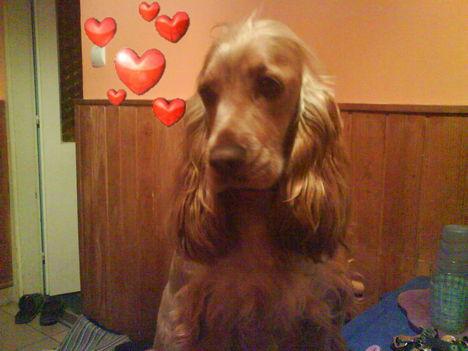 az én kis kutyám:)