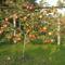 Böcskei Imre kerti fotója