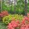 Rhododendron özön