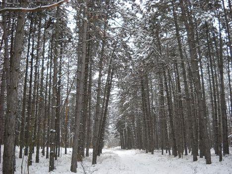 Téli séta az Alföldi - kéken Ásotthalom -12 km -056