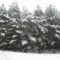 Téli séta az Alföldi - kéken Ásotthalom -12 km -059