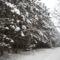 Téli séta az Alföldi - kéken Ásotthalom  -12 km -029