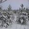 Téli séta az Alföldi - kéken Ásotthalom  -12 km -046