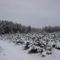 Téli séta az Alföldi - kéken Ásotthalom - 12 km -067