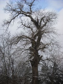 Téli séta az Alföldi - kéken Ásotthalom  -12 km -Rózsa Sándor fája Ásotthalom 075