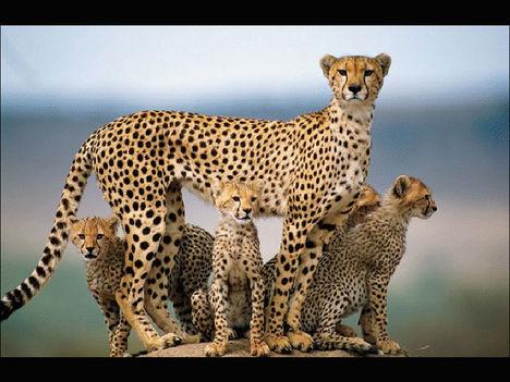 Állati család 48