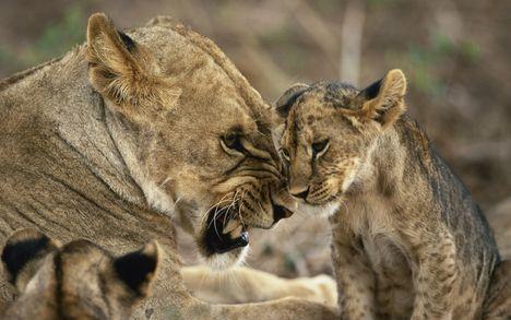 """""""állati"""" csók 23"""
