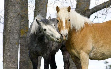 """""""állati"""" csók 43"""