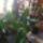 Orchideak-002_562489_32193_t