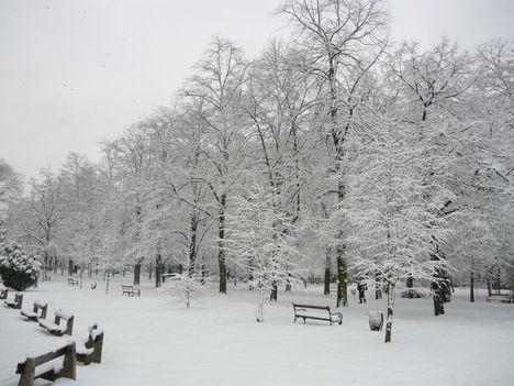 Debreceni nagyerdei tél