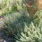 fűszernövények póréval