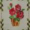 P6230057 rózsák