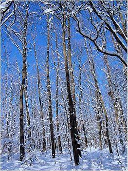 A téli kék ég.