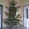 2009 Karácsony:  A faluközösség karácsonyfája