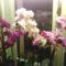 orchideáim egy része