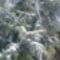 Téli kép 1