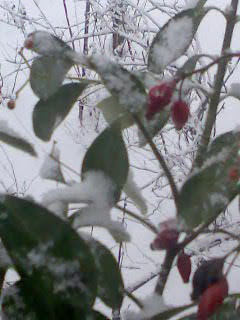 Téli kép 6