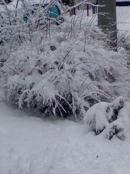 Téli kép 7