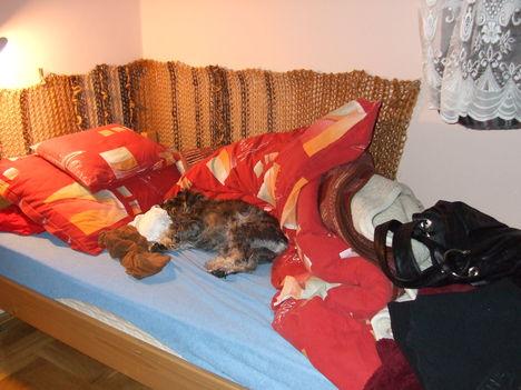 Vetetlen ágyban igazi a szundi...
