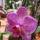 Werner Antalné Irén virágai