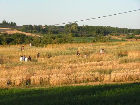 francia biogazdaság 11