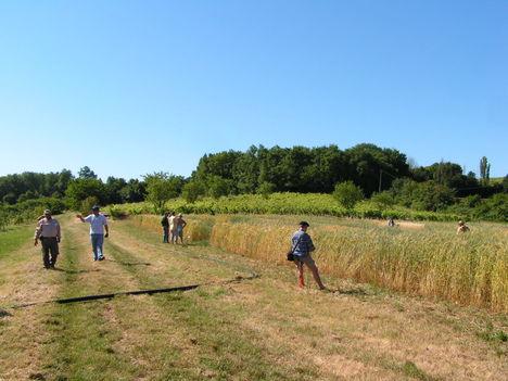 francia biogazdaság 4