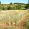 francia biogazdaság 5
