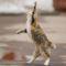 Meddig nyúl a cica ?