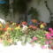 balkonvirágok 1