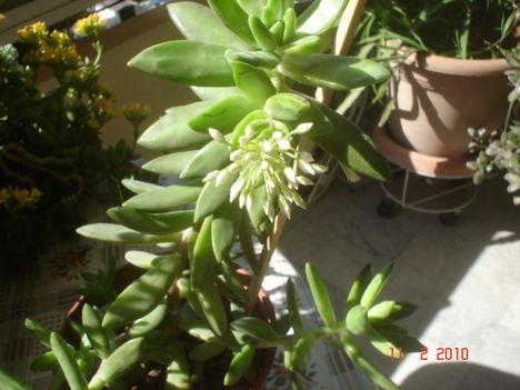 balkonvirágok 6